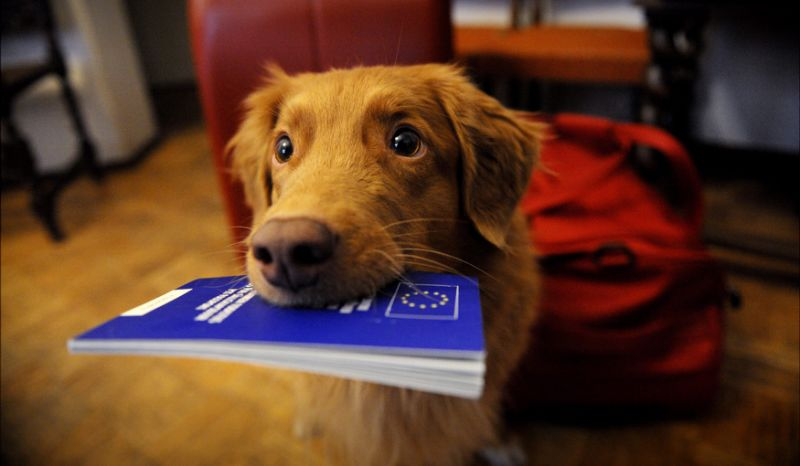 Travelling with your Cat or Dog between the UK and…