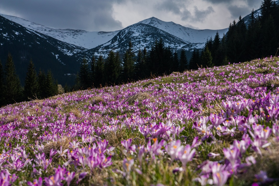 Spring In The Alps Is A Good Time To View Ski Property